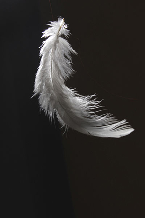 Black and White Feathers Falling